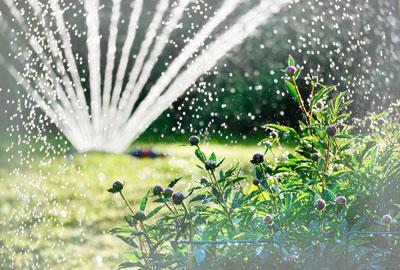 Podlewanie w ogrodzie deszczowka